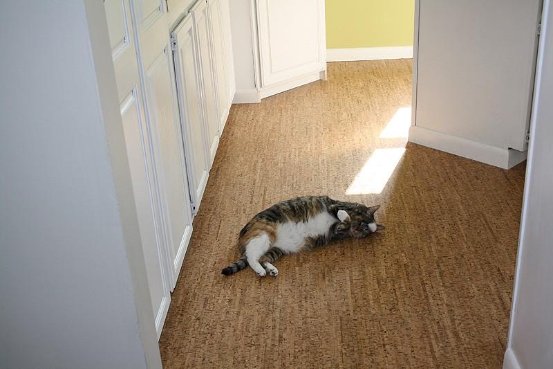 Eco Friendly Floors